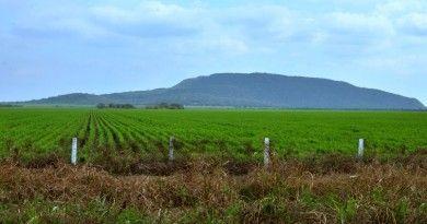 Amplían período de siembra del cultivo de soya hasta el 31 de juli