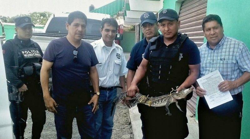 Entregan a Profepa cocodrilo encontrado en Primaria de Cd. Naranjos